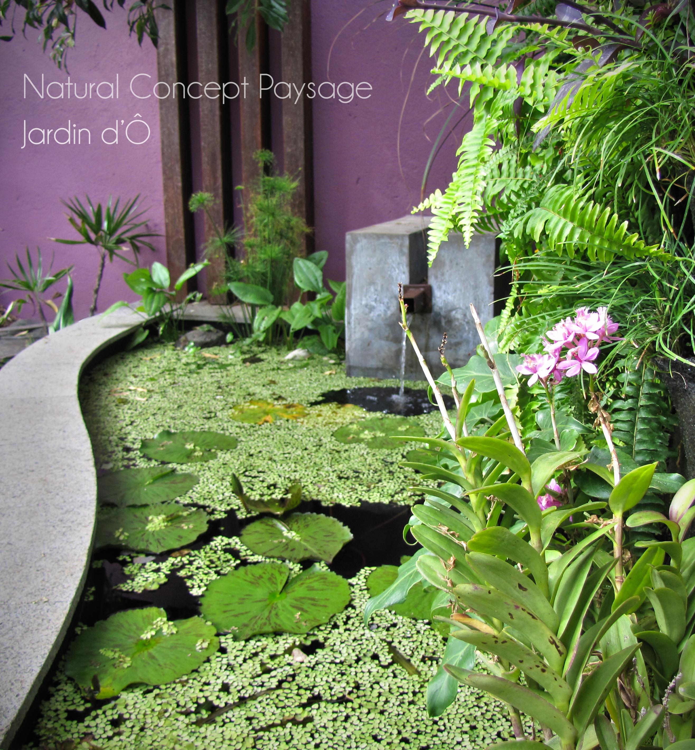 Bassin natural concept paysage jardin d paysagiste for Paysage jardin