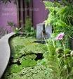 BASSIN - Natural Concept Paysage - Jardin d'Ô - Paysagiste - Mur végétal - Ile de la Réunion 974 - aquatique