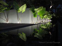 cropped-natural-concept-paysage-jardin-blue-margouillat-juillet-2013-ile-de-la-reunion-st-leu-nuit.jpg