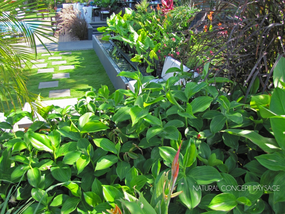 Natural concept paysage r union paysagiste le de la for Entretien jardin ile de la reunion