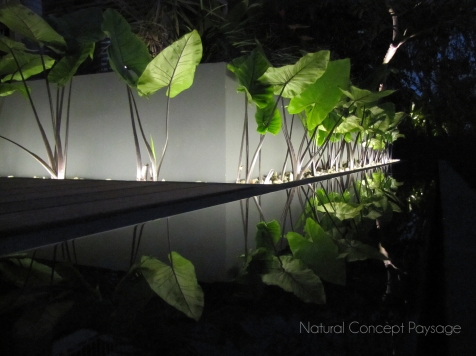 Natural Concept Paysage - Jardin Blue Margouillat - Juillet 2013 - Ile de la Reunion - St Leu nuit