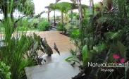 NATURAL CONCEPT PAYSAGE - JARDIN TROPICAL - EXOTIQUE - PAYSAGISTE REUNON 974