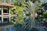 Natural Concept Paysage - Créateur de jardin contemporain - Réunion - 974 (1)
