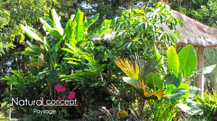 Natural Concept Paysage - Créateur de jardin contemporain - Réunion - 974 (2)